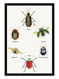 Beetles of Brazil, Britain, England and Saint Domingo Posters by Sir William Jardine