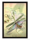 Insects: Mantis Religiosa Prints by James Duncan