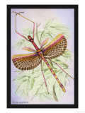 Insect: Phasma Necydaloides Prints by James Duncan