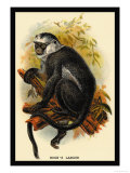 Hose's Langur Print by G.r. Waterhouse