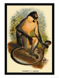 Everett's Langur Prints by G.r. Waterhouse
