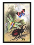 Butterfly, Dragonfly, and Beetles Print by James Duncan