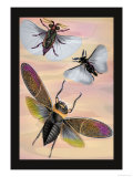 Three Insects in Flight Poster by James Duncan
