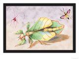 Three Insect Examples Prints by James Duncan