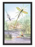 Insects: Pimpla Manifestator, Stephanus Coronatus Prints by James Duncan