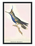 Hummingbird: Trochilus Delandii Posters by Sir William Jardine