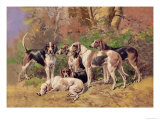 Poitou Hounds Prints by Baron Karl Reille