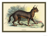Caracal Prints by Sir William Jardine