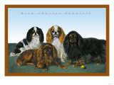 King Charles Spaniels Poster