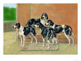 Gascon-Saintongeois Hounds of the Levesque Type Art by Thomas Ivester Llyod