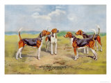 Orthodox Foxhounds Prints by Thomas Ivester Llyod