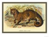 Common Palm Civet Plakat av Sir William Jardine