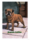 Typical Brussels Griffon Champion Premium Giclee Print