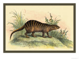Exotic Creature Prints by Sir William Jardine