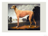 Greyhound on a Parkland Landscape Posters by Christine Merrill