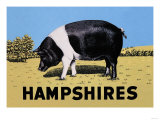 Hampshires Prints