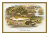 Ruffe and Miller's Thumb Poster by A.f. Lydon