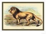 Lion Prints by Sir William Jardine