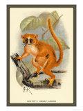 Smith's Dwarf-Lemur Poster by Sir William Jardine