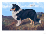 Reverend Hamilton's Collie Prints