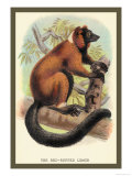 The Red-Ruffed Lemur Prints by Sir William Jardine