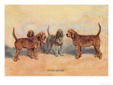 Otter Hounds Prints by Thomas Ivester Llyod