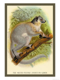 The White-Footed Sportive Lemur Prints by Sir William Jardine