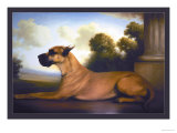 Recumbent Great Dane Print by Christine Merrill