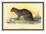 Fishing Cat Prints by Sir William Jardine