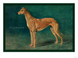 Coursing Greyhound Print