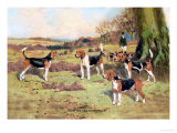 Beagles Print by Thomas Ivester Llyod