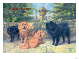 Four Champion Chow-Chows Prints