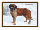 Smooth Coated Saint Bernard Poster