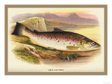 Great Lake Trout Posters by A.f. Lydon