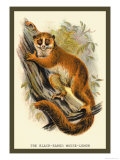 The Black-Eared Mouse Lemur Prints by Sir William Jardine