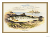 Lochleven Trout Prints by A.f. Lydon