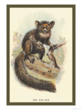 The Aye-Aye Premium Giclee Print by Sir William Jardine