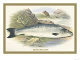 Grilse Prints by A.f. Lydon