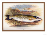 Pike Prints by A.f. Lydon