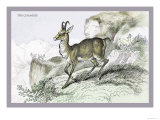 The Chamois Prints by John Stewart