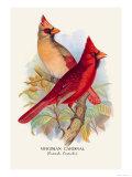 Virginian Cardinal Prints by Arthur G. Butler