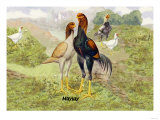 Malay Chickens Print
