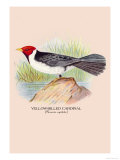 Yellow-Billed Cardinal Print by Arthur G. Butler