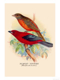 Scarlet Tanager Prints by Arthur G. Butler
