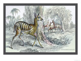 Harnessed Antelope Prints by John Stewart