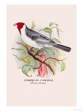 Dominican Cardinal Prints by Arthur G. Butler
