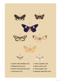 Agarista a Emorrhoidalis, Guer Posters