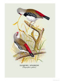 Diamond Sparrow Prints by Arthur G. Butler