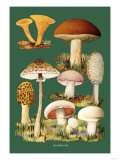 Mushrooms Premium Giclee Print