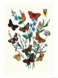 Butterflies: M. Cynthia, M. Athalia Prints by William Forsell Kirby